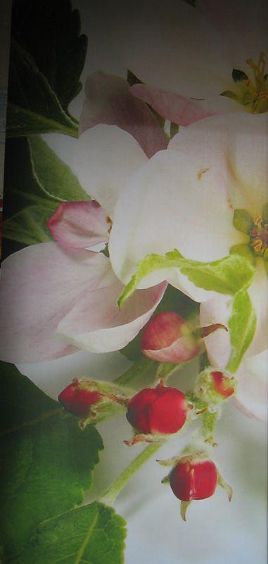 Flächenvorhang-Apfelblüte